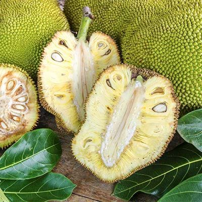 Moko has jack fruit