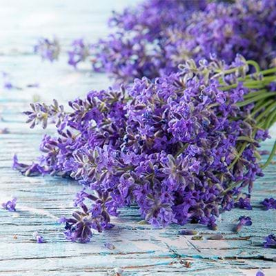 The Bee's Knees has lavender